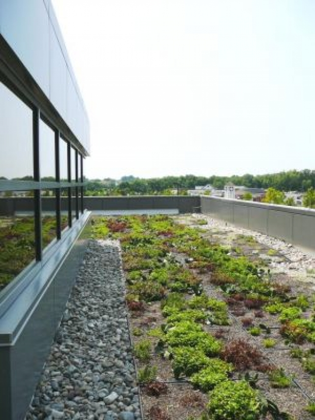 Why Green Roofs are So Much Better than Asphalt Roofs | Columbia, MD
