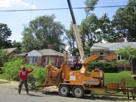 Keep Your Hard Earned Cash | Leesburg, VA Tree Service
