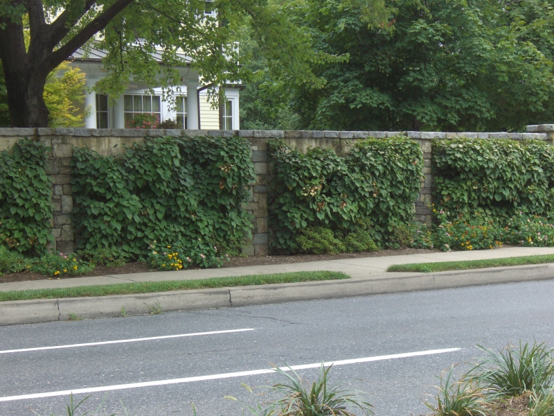 3 interesting ways to dress up your block retaining wall. Black Bedroom Furniture Sets. Home Design Ideas